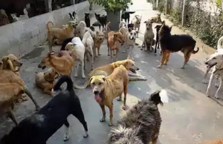 नवजात को पॉलिथीन में लपेटकर नाले में फेक गई थी मां, कुत्तों ने आकर बचाई जान