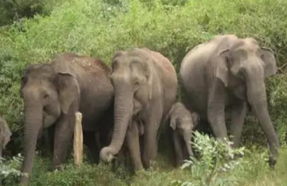 जंगली हाथियों ने गांव पर किया हमला, कई घरों को किया क्षतिग्रस्त
