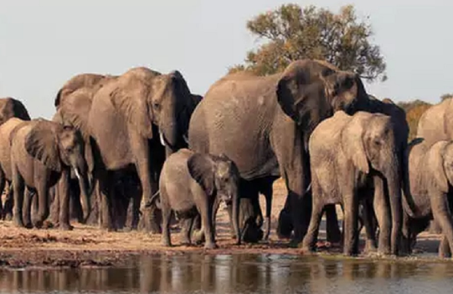 जंगली हाथियों ने लोगों के घरों और झोपड़ियों में की तोड़-फोड़