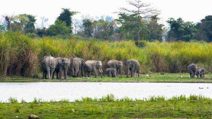 elephant numbers, indian elephants, forest occupied, asian elephants, elephants in danger, हाथियों की संख्या, भारत में हाथी, जंगल अतिक्रमण, एशियाई हाथी, हाथियों पर खतरा