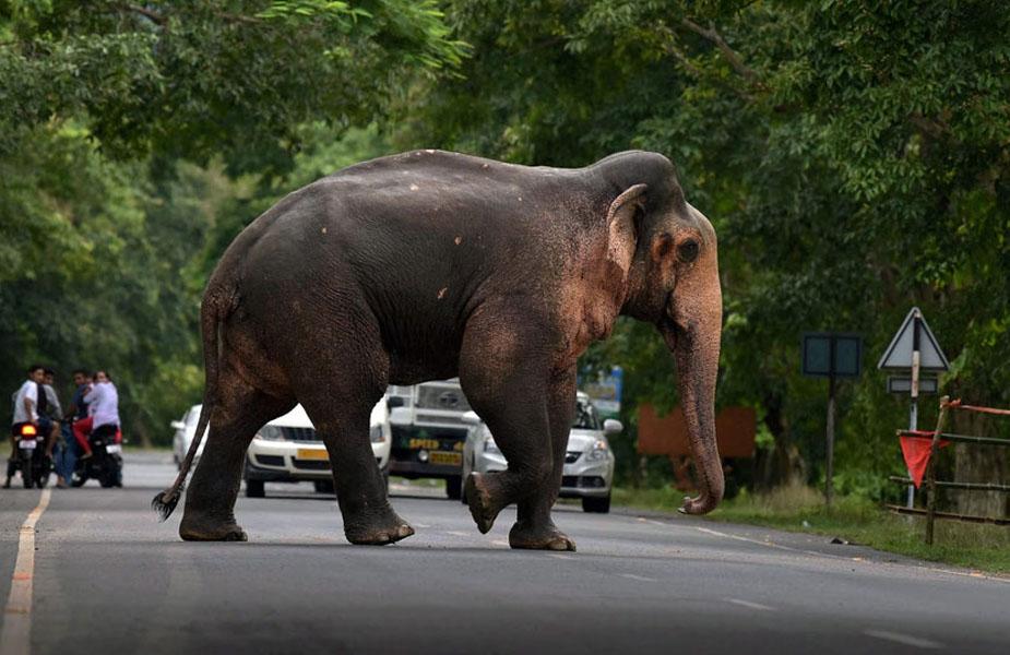 हाथियों का आतंक-Elephant terror