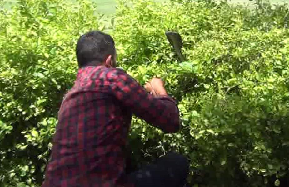 दीपक ने वन विभाग के साथ भी कई रेस्क्यू में की मदद