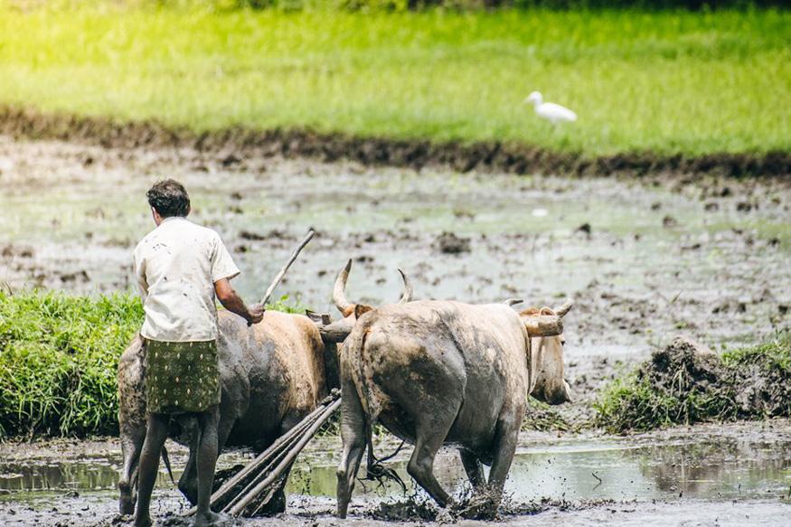 मोदी सरकार 2.0 के 100 दिन, 100 days of modi government 2.0, किसान, Farmer, कृषि बजट, agriculture budget, Pradhan Mantri Kisan Pension Yojana, किसान पेंशन योजना, प्रधानमंत्री मानधन योजना, पीएम-किसान सम्मान निधि स्कीम, Pradhan Mantri Kisan Samman Nidhi, नरेंद्र मोदी सरकार, narendra modi government, kisan credit card, किसान क्रेडिट कार्ड, msp, एमएसपी, Minimum Support Price for Kharif Crops, खरीफ फसलों के लिए एमएसपी