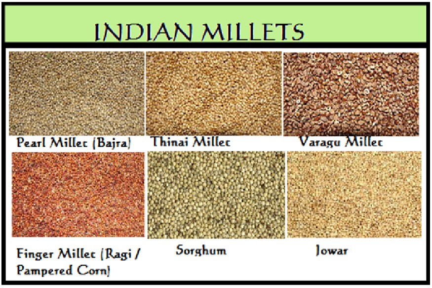 caorse grains or millets why mota anaj is so important why modi talk about jowar bajra ragi cultivation