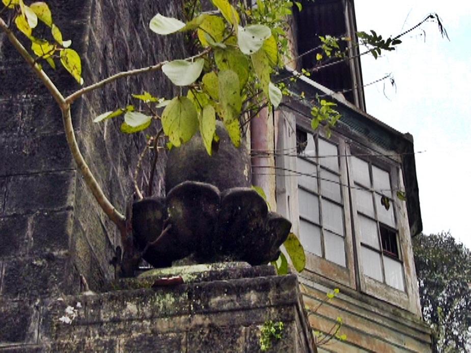 पैलेस भवन की दीवारों पर पेड़ और झाडि़यां उग आई हैं.