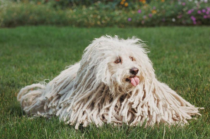 मार्क जुकरबर्ग का कुत्ता बीस्ट