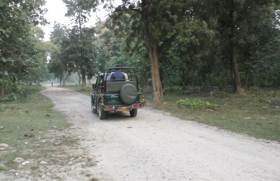 पर्यटको में बाघ (Tiger) और हाथी (Elephant) को देखने के लिए खास रोमांच देखा गया.
