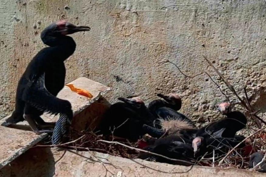 Mumbai, Aarey Colony, Kerala, Railway Station Complex, Migratory Birds, Tree Cutting