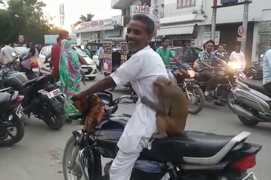 pilibhit monkey
