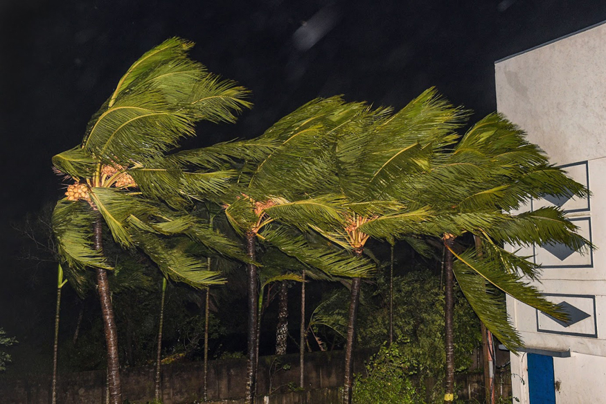 Trees sway as heavy wind induced by Cyclone Bulbul hits Bakkhali, in South 24 Parganas district