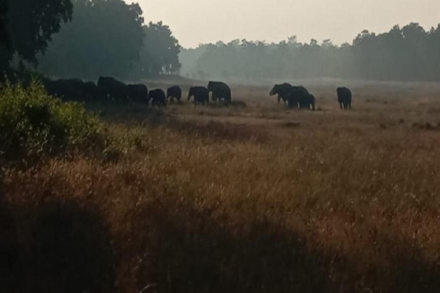 News - शाम होते ही जंगली हाथी गांवों का रुख कर लेते हैं जिससे ग्रामीणों का जीना मुश्किल हो गया है, Bandhavgarh
