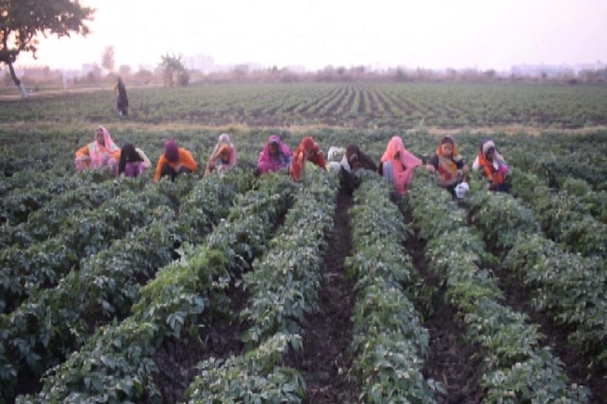 News - 'किसान लक्ष्मी योजना' में बदलाव कर 10 रूपये की जगह 35 रूपये प्रति पौधा देगी सरकार