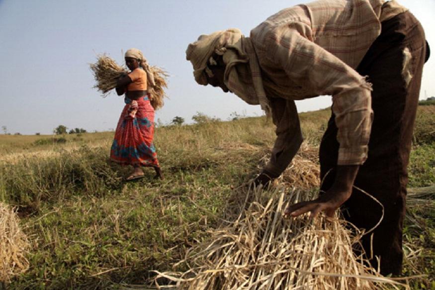 समर्थन मूल्य पर धान बेचना छत्तीसगढ़ के महासमुंद जिले के किसानों के लिए परेशानी का सबब बन गया है