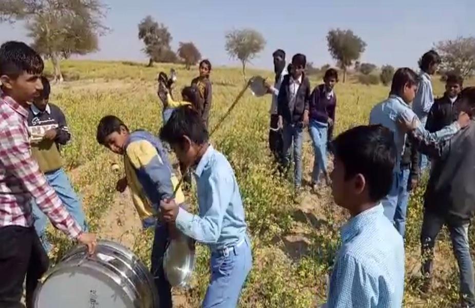 ढोल और थाली को बजाकर टिड्डियों को खेत से भगाते बच्चे