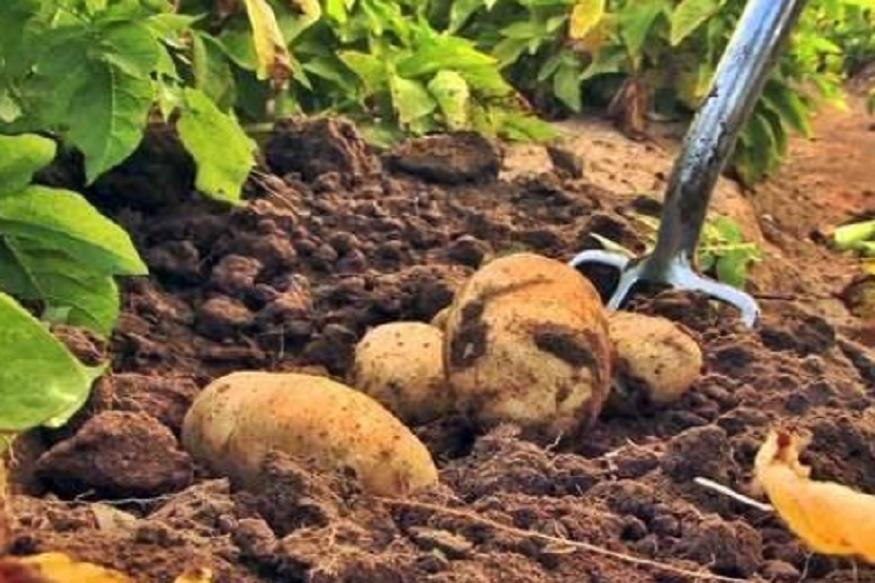 क्या है PKVY, किसानों की योजना, मोदी सरकार और किसान, कैसे मिलेगा PKVY योजना का फायदा, PKVY योजना से जुड़ी सभी बातें, organic farming, आर्गेनिक फार्मिंग, जैविक खेती, organic farming business benefits, आर्गेनिक फार्मिंग से जुड़े बिजनेस लाभ, organic food market in india, How to do organic farming, कैसे करें आर्गेनिक खेती