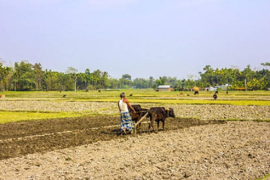 धनिया की खेती में 40 हजार लगाकर कर सकते हैं लाखों रुपये की कमाई!