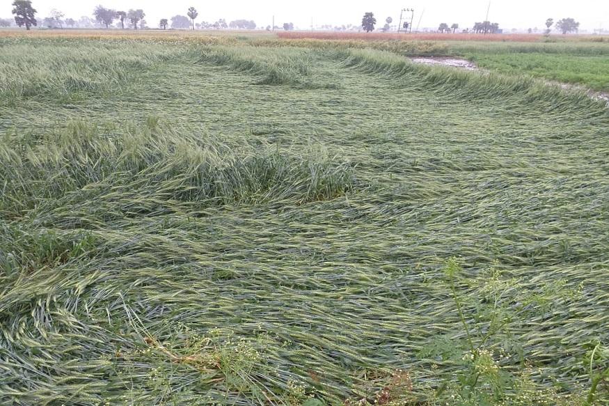 Rain alert in 10 districts, 10 जिलों में बारिश का अलर्ट, कोरोना वायरस लॉकडाउन, Coronavirus Lockdown, हरियाणा सरकार, Haryana Government, किसान, Farmers news, kisan, न्यूनतम समर्थन मूल्य, MSP-Minimum Support Price, Rabi crops, रबी फसलें, गेहूं की फसल, wheat crop