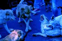 मुंबई में कुत्तों कर रंग हो रहा है नीला