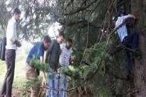 अब जंगल में टोकन ढूंढ़ेंगे तो मिलेगी सैलरी..!