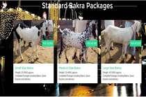 नया ट्रेंड: बकरे किस्तों में नहीं पैकेज में बिक रहे हैं