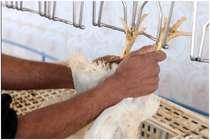 मुर्गे के पंजों और गधों को बेच कर गुजर बसर कर रहा है पाकिस्तान