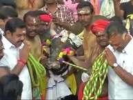 तमिलनाडु के मुख्यमंत्री के पलनीस्वामी ने मदुरै के अलंगनलूर में मंगलवार को जल्लीकट्टू को हरी झंडी दिखाई. <strong>(image credit: ANI)</strong>