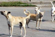 देश का दूसरे नंबर का सबसे स्वच्छ शहर, यहां है कुत्तों का आतंक!