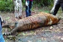 पेंच टाइगर रिजर्व में फिर मिला बाघ का शव, एक महीने में दूसरी मौत