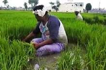 MP: खराब हुई फसलों का सर्वे कराएगी बीजेपी, गांव-गांव जाएंगे कार्यकर्ता