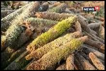 VIDEO: बारिश से फसल हुई खराब, किसानों ने की सर्वे की मांग
