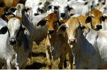 उत्तराखंड विधानसभा में गाय को 'राष्ट्र माता' घोषित करने का संकल्प पारित, कांग्रेस ने भी किया सपोर्ट