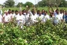कपास की 90 प्रतिशत फसल हुई खराब, किसानों ने मांगा मुआवजा