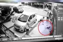 VIDEO: पड़ोसी के पालतू कुत्ते ने दो मिनट में बच्ची को 60 जगह से काटा, हालत नाजुक
