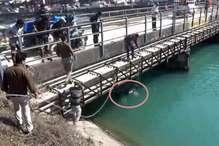 जान जोखिम में डालकर नहर में गिरे गाय-बैल बचाए, मंत्री-सांसद ने बढ़ाया हौंसला