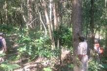 घायल दंतेल हाथी को ढूंढ रहा है वन विभाग, ट्रेंक्यूलाइज कर किया जायेगा इलाज