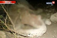 VIDEO: हत्या कर हाथी के दांत ले जाने के मामले में फॉरेस्टर समेत 3 निलंबित