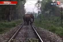 VIDEO: धड़धड़ाती शताब्दी के ट्रैक पर कुछ ही दूर थे हाथी, फॉरेस्ट गॉर्ड ने टाला हादसा