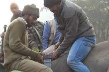 आठ लाख का 'गहना' पहने घूम रहा है भेलकर्मी की जान लेने वाला गुस्सैल हाथी