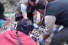 VIDEO: IMA में कंटीली तारों में फंसा गुलदार, इलाज के दौरान मौत