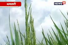 VIDEO: किसानों ने दलहन-तिलहन के बीज लेने से किया इंकार, ये है वजह