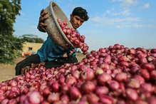 प्याज 50 पैसे प्रति किलो, फसल के साथ किसान भी हो रहा है बर्बाद