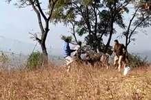VIDEO: देखिए तारों की बाड़ में फंसे सांभर को बचाने में घायल होने से बचे वनकर्मी