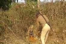 VIDEO: उत्पाद विभाग ने की छापेमारी, 800 किलो महुआ और 30 लीटर शराब जब्त