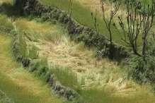 PHOTOS : बारिश में फसल बर्बाद होने पर किसानों ने की मुआवजे की मांग