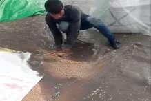 PHOTOS: धरतीपुत्र की मेहनत पर बिगड़े मौसम ने फेरा पानी
