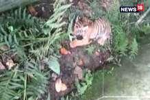 VIDEO : गांव में आए बाघ के बच्चे को वन विभाग ने किया रेस्क्यू