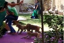 भरतपुर के नदबई में महिला मतदान केन्द्र पर बंदरों ने मचाया आतंक, एक बच्चे को काटा