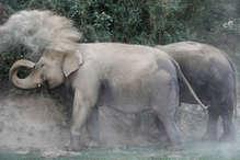 VIDEO: दल से भटके दो हाथी पहुंचे कांकेर, मिले पैरों के निशान