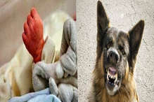 पागल कुत्तों का आतंक : घर में सो रही 25 दिन की बच्ची को मुंह में दबोचा, फिर...
