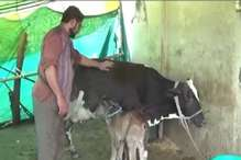 My Name is Khan... मैं करता हूं एक अंधी गाय की सेवा